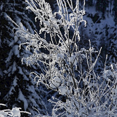 Winter_Defereggental_Osttirol_St. Jakob_Schneekristalle am Baum